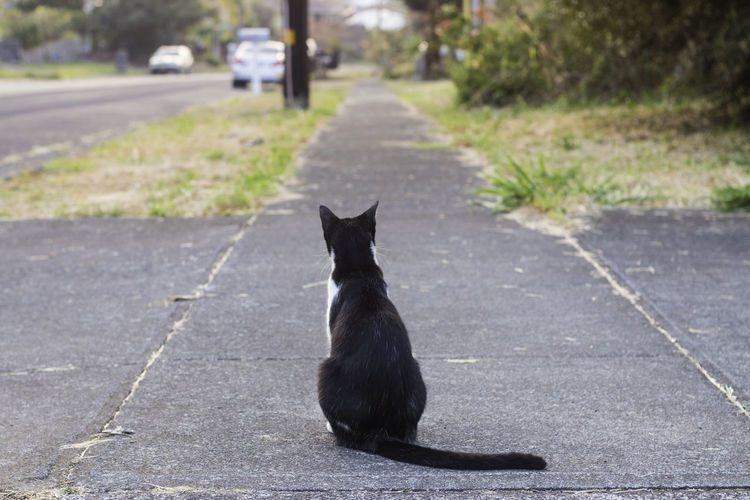 Pet Portraits Animal Themes Black Color Cat Day Domestic Animals Domestic Cat Feline Mammal Nature No People One Animal Outdoors Pets Road Sitting Street