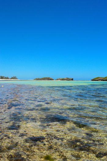 Crystal clear beaches.. Bliss! EyeEm Best Shots EyeEm Gallery EyeEm Selects Mombasa Kenya Kenya Photography Photographer Sea Sea And Sky Seaside Sea Life View Into Land Reef Coral Ocean Floor Seascape Wave Tide