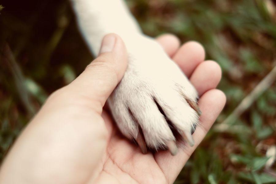 Beagle Dog Hands Fuji Xt20
