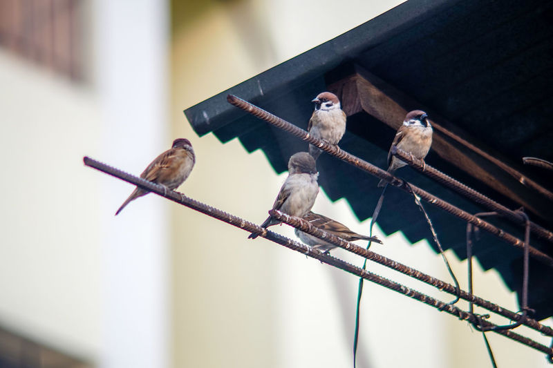 Low angle view of birds perching on rod