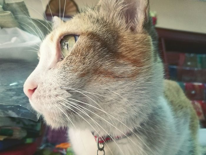 We wouldn't able to know what was he look at One Animal Animal Themes Pets Mammal Close-up Domestic Animals Animal Head  Domestic Cat No People Day Feline Indoors  Water Cat Portrait Indoors