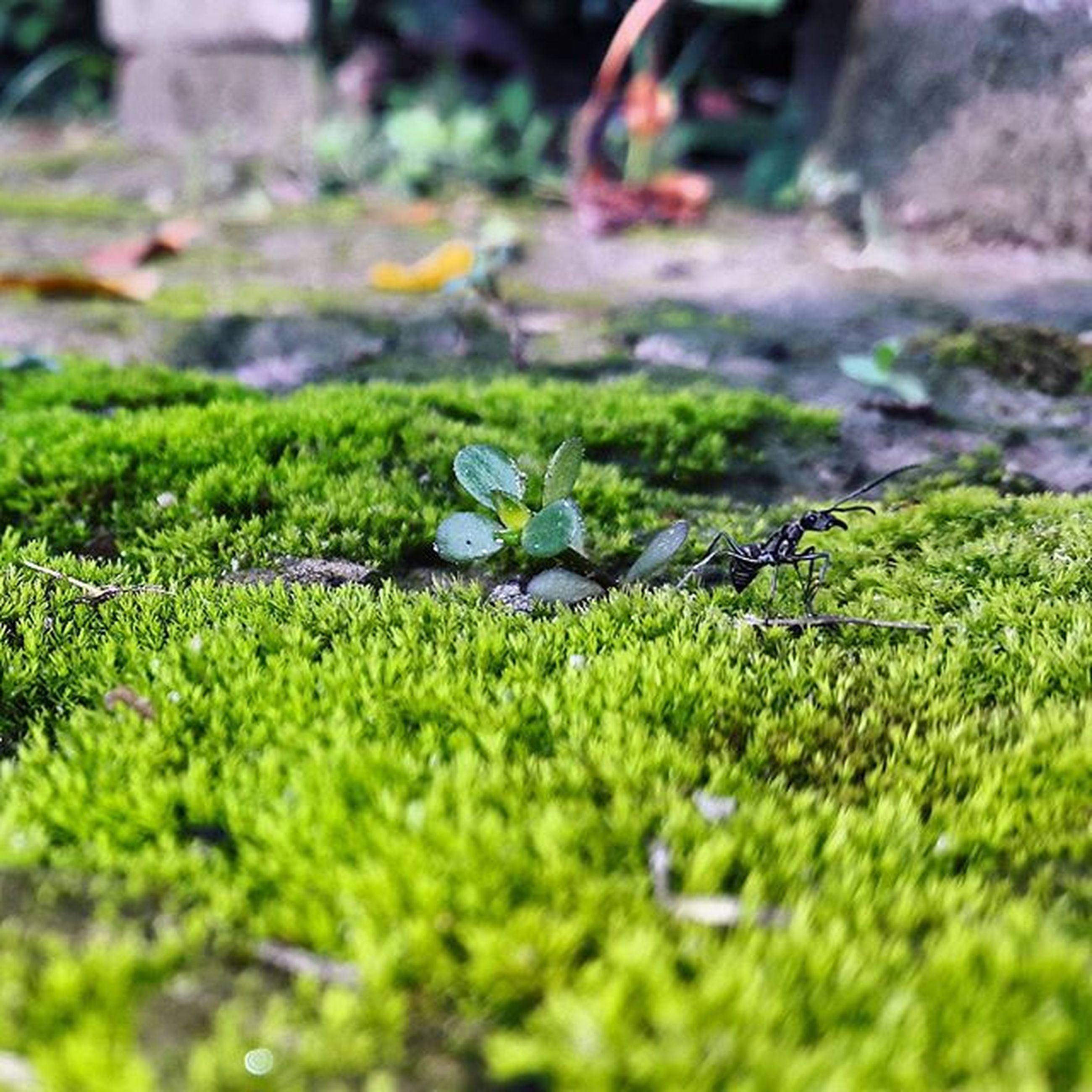 selective focus, grass, green color, growth, moss, surface level, plant, nature, close-up, focus on foreground, field, day, tranquility, beauty in nature, outdoors, leaf, rock - object, no people, green, focus on background