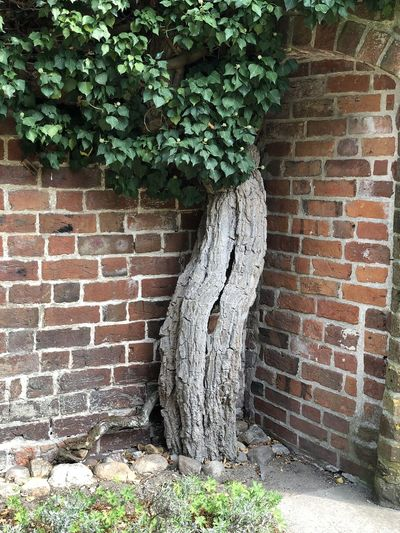 Tree by brick wall against building