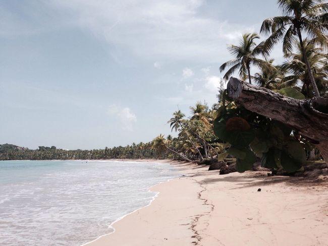 Relaxing place Beach Dominican Republic Caribbean Sea