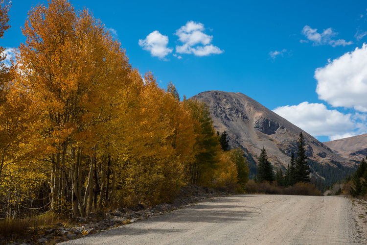 Sep 2018 - Mt. London on the way up tp Mosquito Pass, Colorado Colorado Rocky Mountains Autumn Beauty In Nature Cloud - Sky Day Fall Colors Ablaze Growth Landscape Mountain Nature No People Non-urban Scene Plant Road Scenics - Nature Sky Tranquil Scene Tranquility Tree