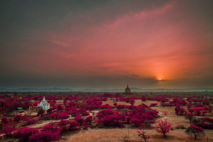 Bagan Beauty In Nature Cloud - Sky Cloudy Flower Growth Horizon Over Land Idyllic Landscape Myanmar Nature No People Non Urban Scene Non-urban Scene Orange Color Outdoors Pink Color Plant Remote Scenics Sky Sunset Tourism Tranquil Scene Tranquility