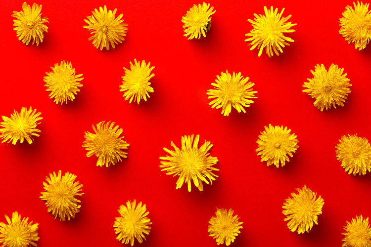 Close-Up Of Dandelions Arranged On Red Background