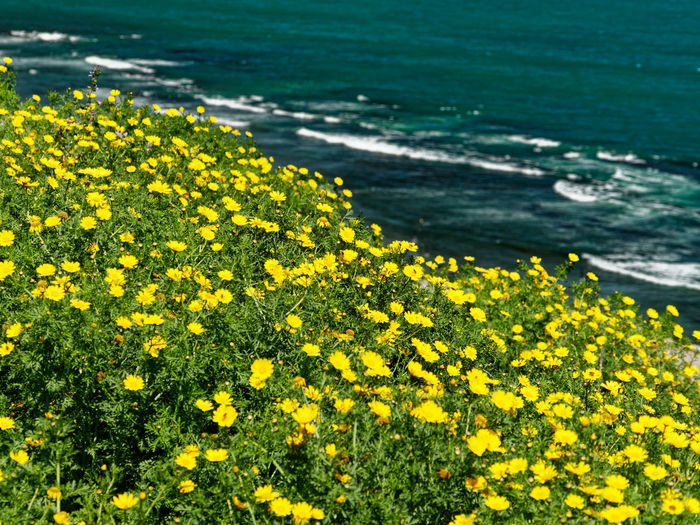 Yellow Flower Flowering Plant Plant Beauty In Nature Growth Freshness Vulnerability  Nature Land Fragility No People Day Outdoors Water Field Tranquility Landscape Environment Flower Head Spring