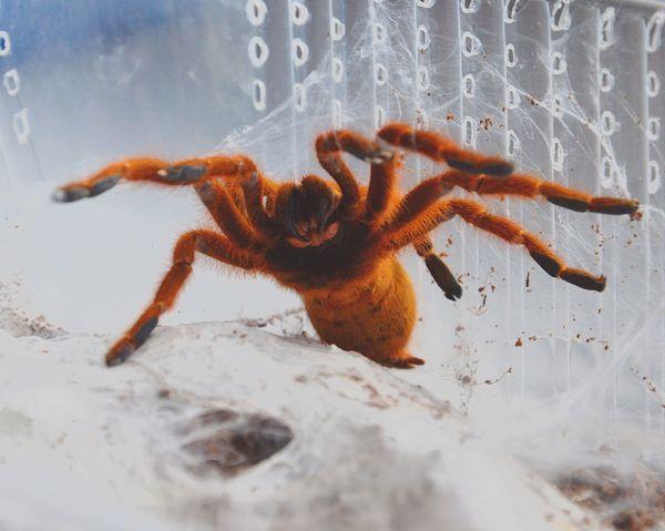Pet Portraits Spider Spiderweb Spider Web