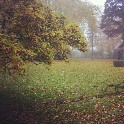 #Good #Morning #MeetingTheParents #Denmark #Early Denmark Early Good Stickygramautumn Meetingtheparents Morning