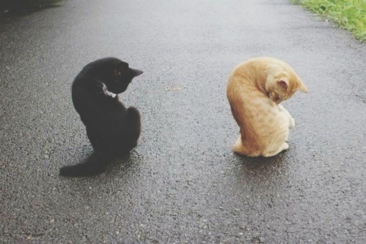 Россия! кошки