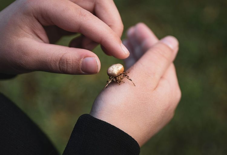 Cropped hand of person with insect