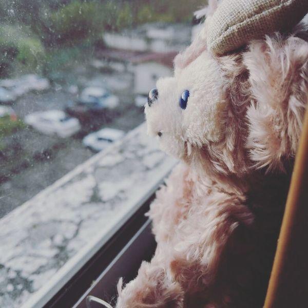 Stuffed Toy Day Sabah Borneo Duffy The Disney Bear ShellieMay Disney