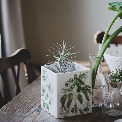 Ceramics Close-up Day Decor Flowers Freshness Home Home Sweet Home Indoors  Interior Lounge Nature No People Plant Potted Plant Table Vase