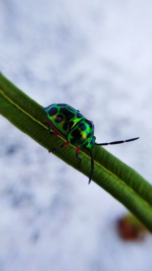 beautiful bug EyeEmNewHere Damselfly Insect Leaf Close-up Animal Themes Sky Green Color Animal Wing Animal Antenna