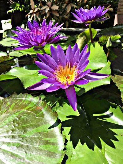Beautiful Flowers Flower First Eyeem Photo