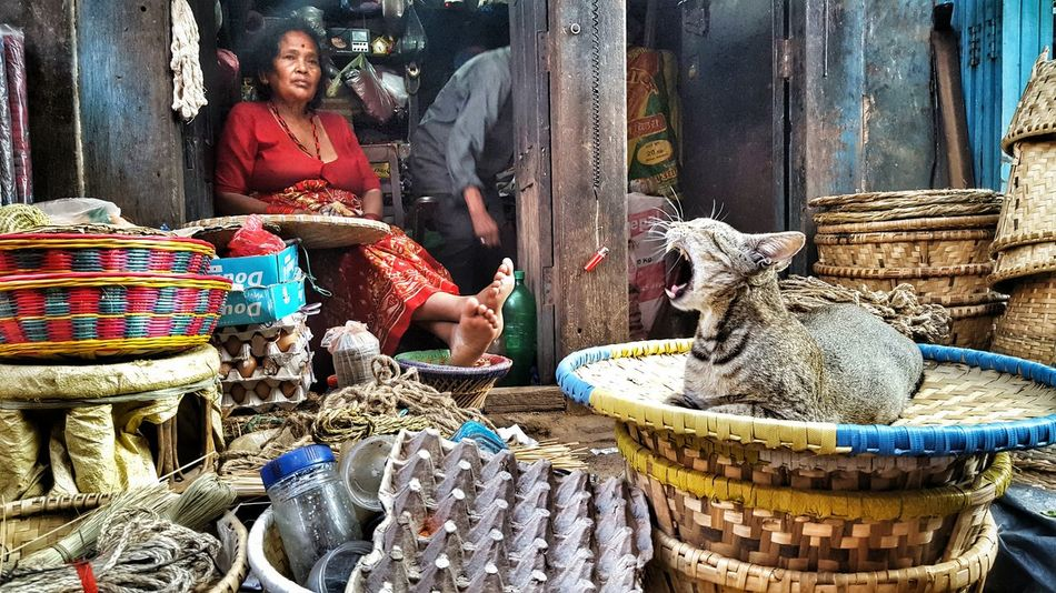 Real People Cultures For Sale Cats Nepal Travel Photography Life Moments Yawning Cat