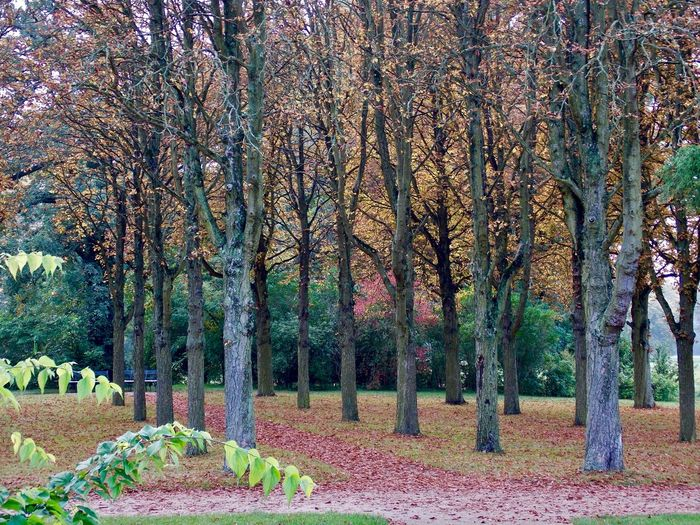 Best travel moments in 2017 ... Sanssouci Park Potsdam Autumn Bare Tree Beauty In Nature Branch Change Day Nature No People Outdoors Park Romantic Place Scenics Tranquil Scene Tranquility Tree Tree Trunk