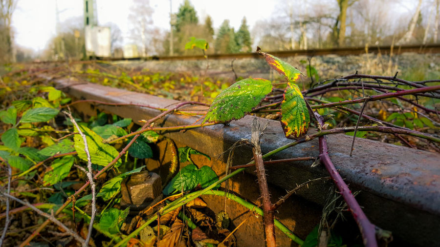 Rail Rails Nouse Thorns Streetphotography Streetphoto_color Street Photography Germany Mobility Plants Nature Naturewins Day Transportation Foreground Focus Metal Nopeople German Rust Rusty Old Screw Green Brown Outdated