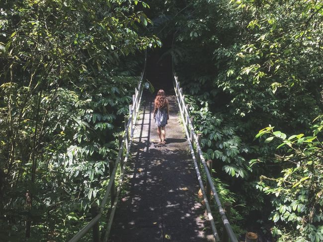 Bridge Showcase: January Forest Full Length Girl Green Color Growth Hanging Leading Lush Foliage Narrow Nature Outdoors Park Pathway Perspective Relaxing Moments River The Way Forward Tree Tree Trunk Tropical Climate Tropics