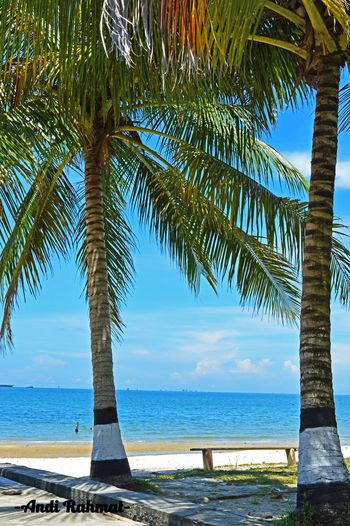 Coconut Tree Beach Nikon D3200 Balikpapan