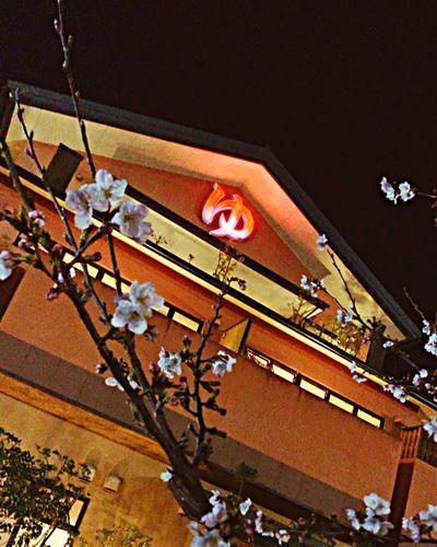 Onsen 温泉 Sakura