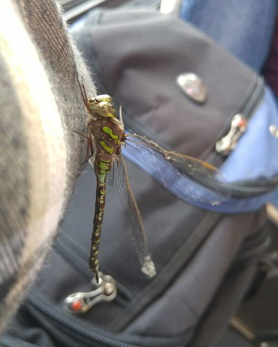 EyeEm Selects Close-up Dragonfly