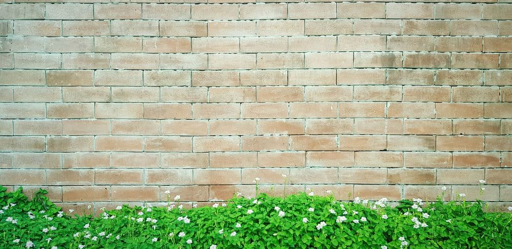 Brick wall with pink flowers