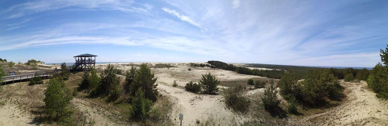 Tree Desert Sky