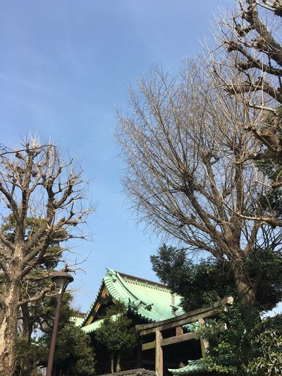 Built Structure Low Angle View Architecture Building Exterior Tree Sky Outdoors No People Day Roof Bare Tree Nature Branch