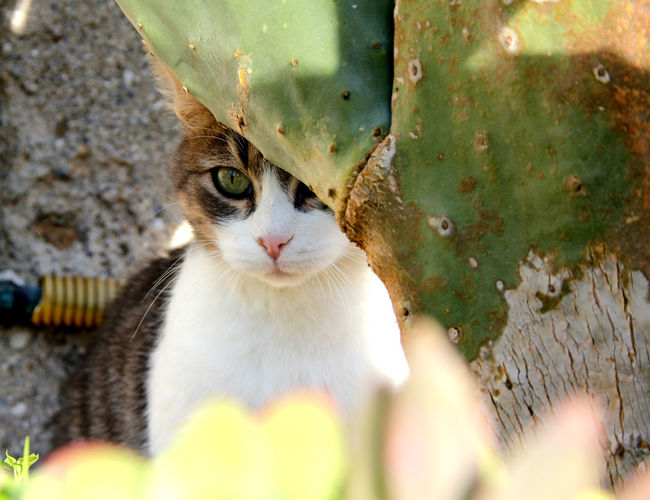 Cat Cat Eyes Cat Lovers Cat Outdoors Cat Portrait Domestic Cat Green Color Green Eyes Looking At Camera Pets Cat Photography Cats Of EyeEm Sweet Mysterious Enigmatic_Feeling