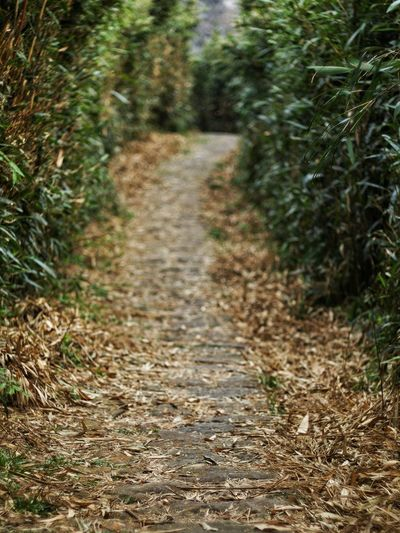 The Way Forward Nature Forest Day No People Outdoors Tranquility Plant Tree Growth Landscape Autumn Grass Beauty In Nature 臺灣 Taiwan 小油坑