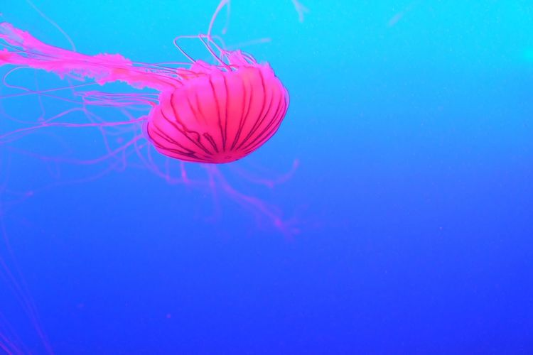 Floating...