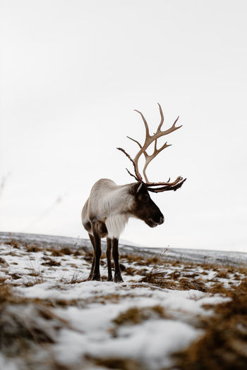 Deer standing on a field