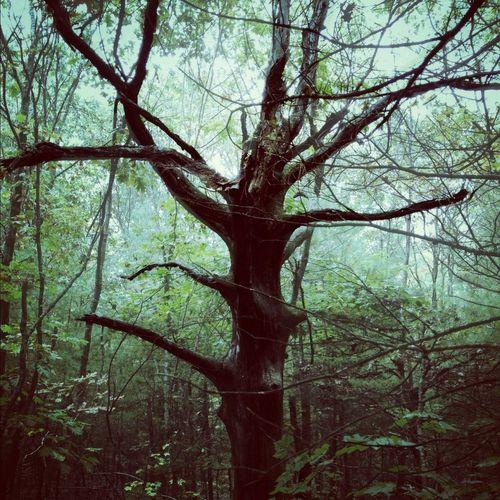 Trees The Environmentalist – 2014 EyeEm Awards