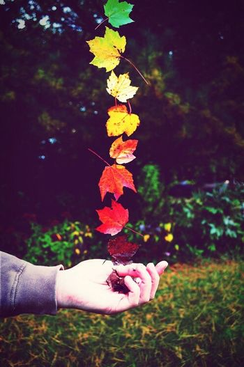 Fall Leaves Nature Talks Leaves Only Leaves Colorful Leaves Colors Changing Wispy Warmth  Fall Is Here. Love The Season