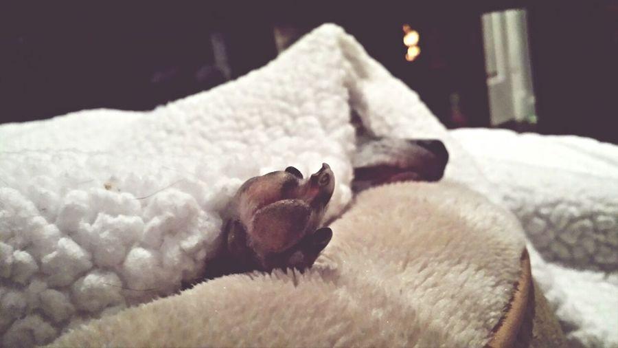 paw Sleeping Dog Yet Another Dog Pic