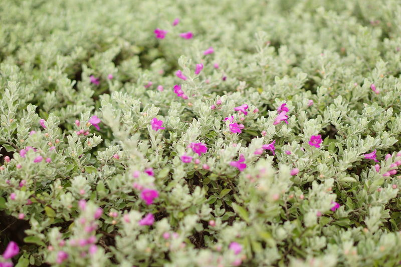 Soft green and violet spike Summer Relaxing Moments Exploring Nature Fragility Textured  Bush Bushes And Flowers Spike Flower Bushy Park Close-up Freshness Defocused Beauty In Nature Flower Day Growth Outdoors Plant No People Nature Green Color Multi Colored Foliage Flower Head Tranquility