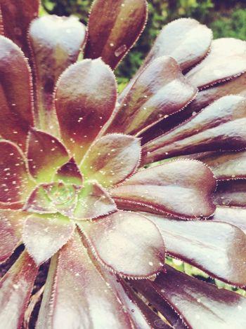 Suculentas Plants Green