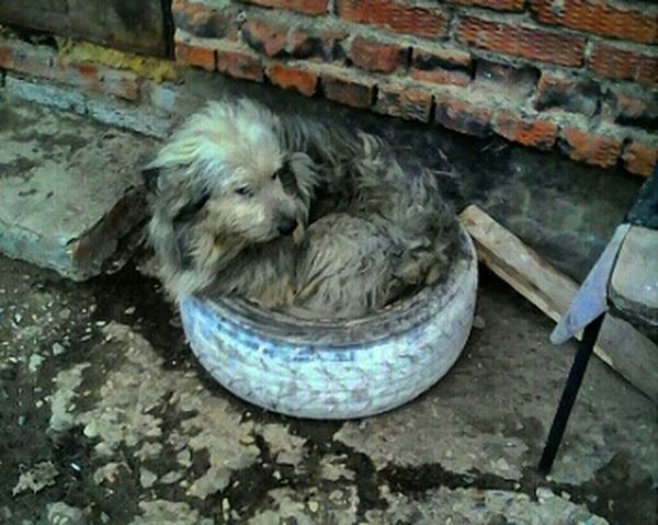 Dog Doggie Homless Eye4photography  EyeEm Gallery EyeEm Best Shots собака бездомная грустьпечаль грусть