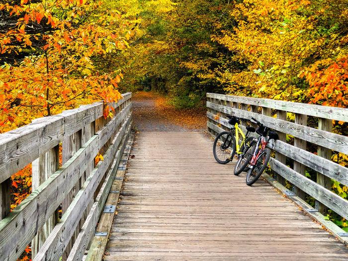 Wooden footbridge over footpath during autumn