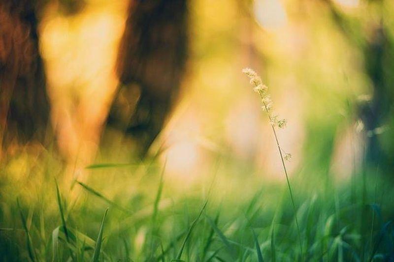август лето тепло Закат солнце краскилета завораживает прекрасно летнийзакат August Summer Sunset Beautiful Summertime Sunset Fayritale сказка Боке Bokeh Gelios гелиос40 Helios40_2