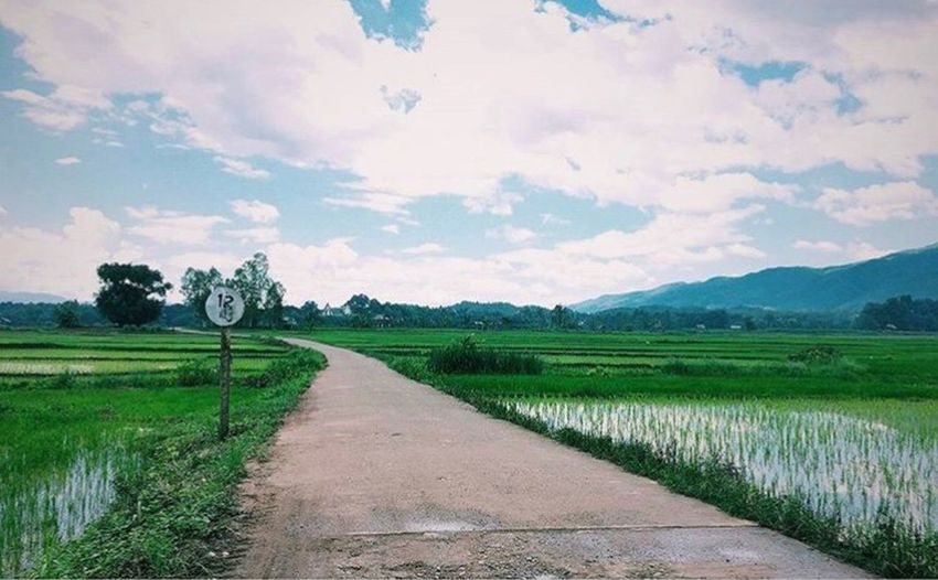 homesick Rice Thai Traditional Road Targeted Destination Be Secure And Peaceful Peaceful Cornfield Homesick