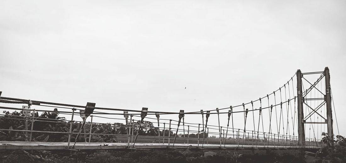 Bird Bridge -