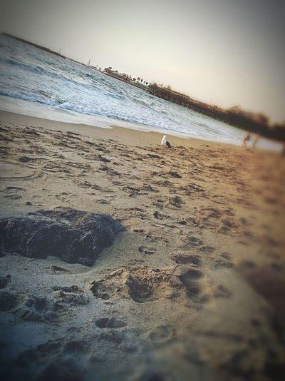 Bird Watching@ Redondo BeachThis Seagull was People Watching and set his gaze on me. Being A Beach Bum Eyeem Best Seascape Sunsetporn Eyeemphotography California Coast Mobilephotography