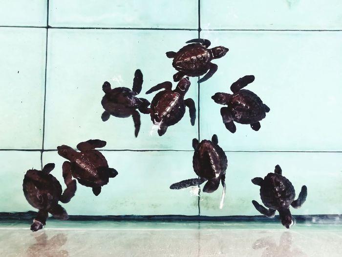 Animal Representation Indoors  No People Day Animal Themes Close-up Turtle 🐢 Sea Turtle Swimming Pool