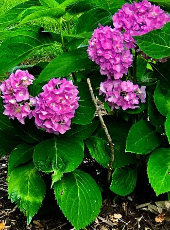Flowering Plant Plant Flower Freshness Beauty In Nature Vulnerability  Growth Fragility Leaf Plant Part Close-up No People Day Flower Head Nature Pink Color
