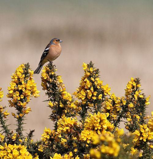 Bird perching on yellow flowering plant