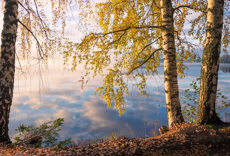 Scenic view of autumn landscape, fall colors trees, blue water, tree reflected in lake, seasons change, sunny morning, autumnal park, fall nature. Tree Plant Beauty In Nature Tranquility Autumn Tranquil Scene Trunk Tree Trunk Nature Scenics - Nature Autumn Collection Outdoors No People Forest Non-urban Scene Water Lake Landscape Sunrise Finland Fall Colors Moment Of Silence Fog Mist Foggy