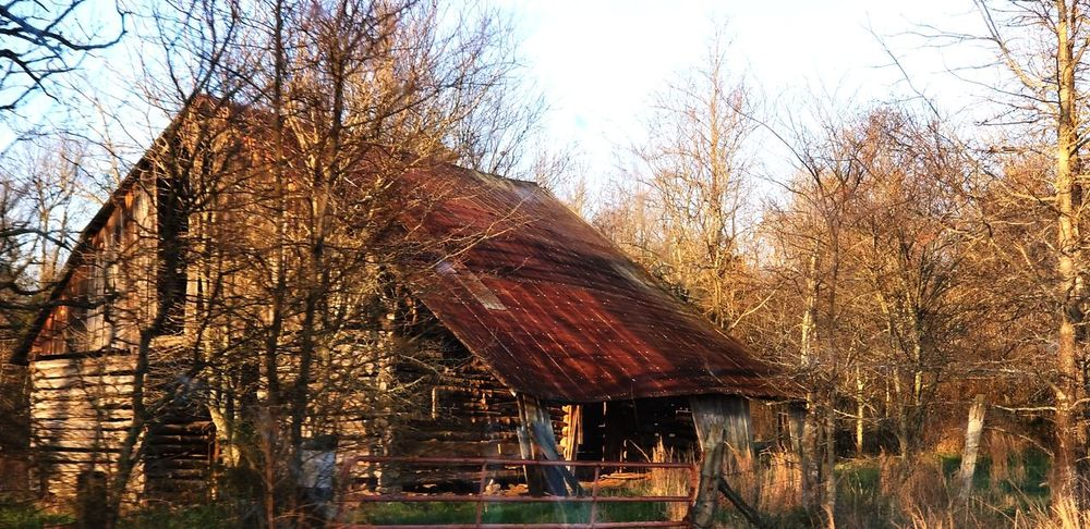 aging lovley Barn Collection Barn Rustygoodness Delapidated Thru The Fence From Where I Stand Abandoned Rural Scenes Country Life Beauty In Nature Tree Shelter Sky Thatched Roof Deterioration Run-down Damaged
